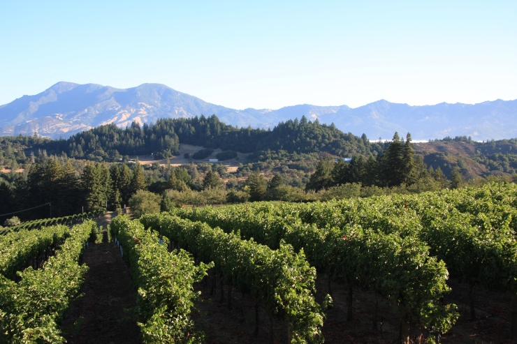 View from main residence: vineyards and Mt St Helena
